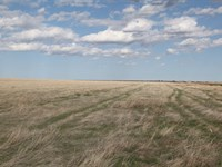 320 Ac Expired Crp : Haxtun : Phillips County : Colorado
