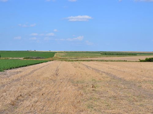 Cannell Dryland : Julesburg : Sedgwick County : Colorado