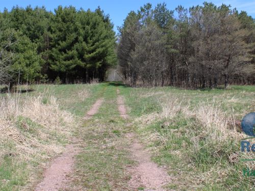 120+/- Acres Of Hunting Land : Neillsville : Clark County : Wisconsin