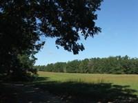 Lazy Acres Farm, Fields And Timber : Hephzibah : Burke County : Georgia