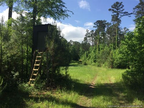 Ready-To-Go Hunting Paradise : Hazlehurst : Copiah County : Mississippi