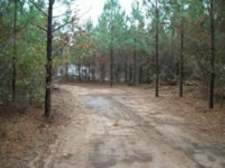 5 Acres | Owner Financing | $315 Mo : Crawfordville : Taliaferro County : Georgia