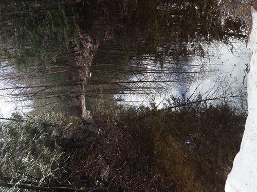 Lost Lake Acreage : Sandpoint : Bonner County : Idaho