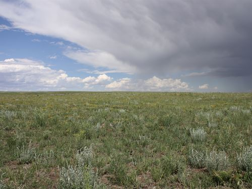 Peyton 120 Acres -Price Reduced. : Peyton : El Paso County : Colorado