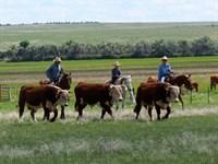 Turner Legacy Ranch : La Junta : Otero County : Colorado