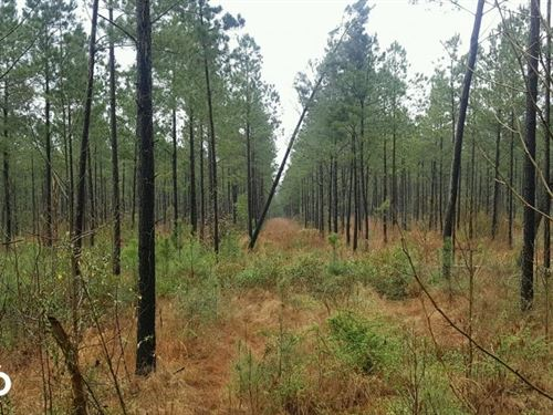 Secluded Homesite : Burgaw : Pender County : North Carolina
