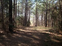 203 Acres Of Hunting & Timberland : Lawley : Perry County : Alabama