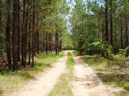 Parcel B Terrell 25100 Tract : Dawson : Terrell County : Georgia