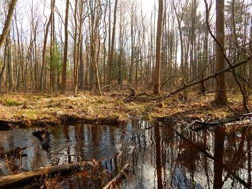 This Land Has It All : Ludington : Mason County : Michigan