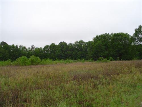 Dillon Tract : Latta : Dillon County : South Carolina