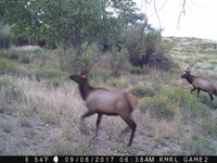 Premimum Hunting & Cattle Ranch : Walsenburg : Huerfano County : Colorado