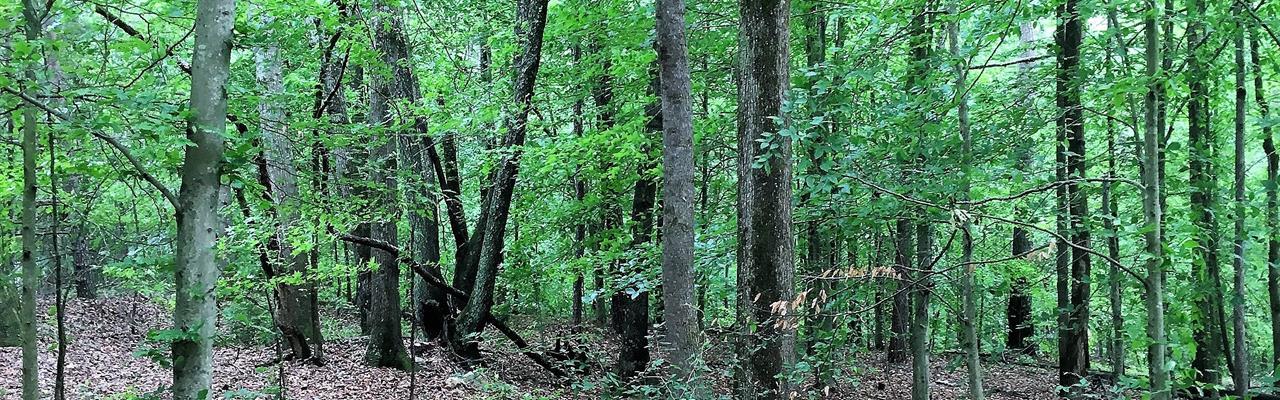 Ethridge Road : Jefferson : Jackson County : Georgia