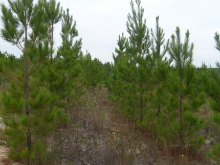 Parcel C Taylor 31061 Tract : Butler : Taylor County : Georgia