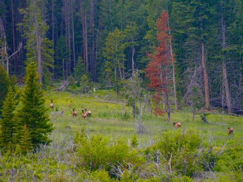Highland Wildlife Wonder : Butte : Silver Bow County : Montana