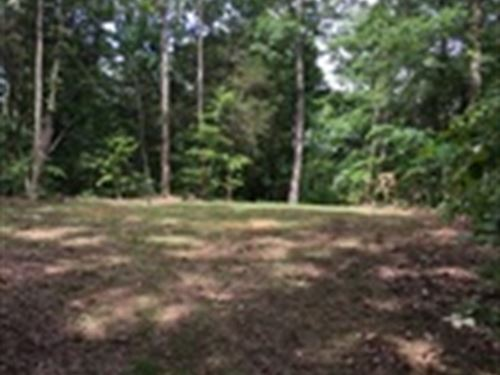 44 Wooded Tract In Columbia, Ky : Columbia : Adair County : Kentucky