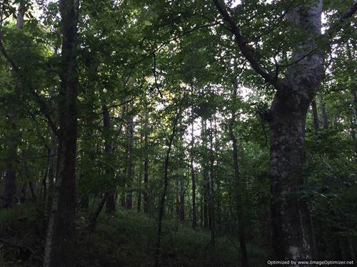 170+/- Acres : Hazlehurst : Copiah County : Mississippi