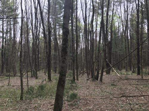 White Pine Camp Lot : Williamstown : Oswego County : New York