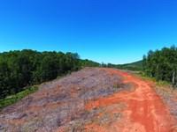 Nimblewill Ridge Tract : Dawsonville : Lumpkin County : Georgia