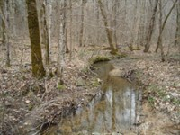 218 Acres Wooded, Creek Fentress Co : Jamestown : Fentress County : Tennessee