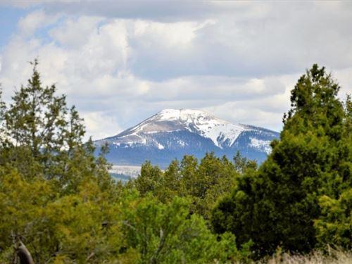 Bear Creek Lot 65 : South Fork : Rio Grande County : Colorado