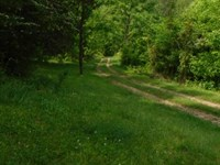 79 Acres Wooded In Clay Co. : Whitleyville : Clay County : Tennessee