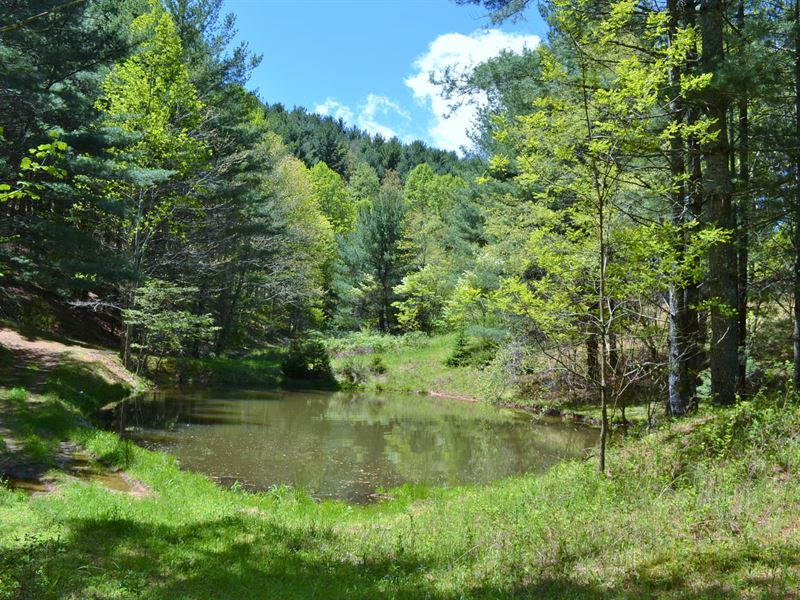 A Sportsman's Paradise : Mouth Of Wilson : Grayson County : Virginia