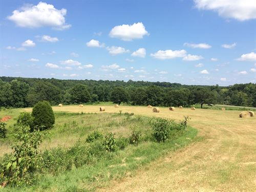 10 Acres Of Pasture Land : Troy : Pike County : Alabama