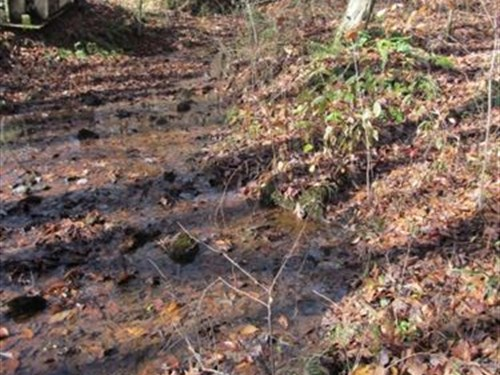 29 Acres With Creek : Hohenwald : Lewis County : Tennessee