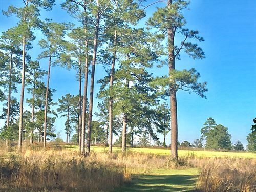 Pinewoods Plantation : Monticello : Jefferson County : Florida