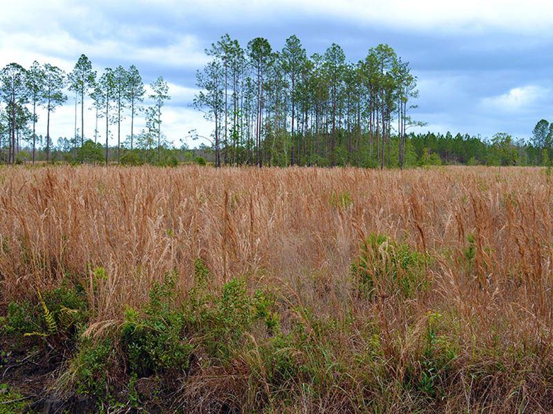 Woods Of Ormond Beach : Ormond Beach : Volusia County : Florida