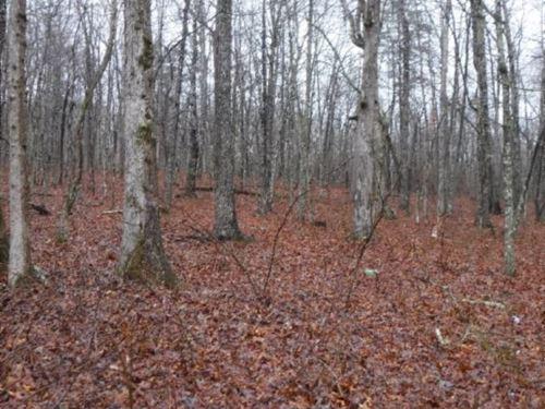 64.34 Wooded In Van Buren Co. : Spencer : Van Buren County : Tennessee