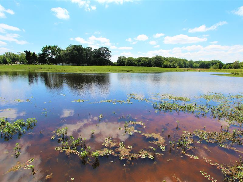 House On Large Acreage For Sale In : Bogata : Red River County : Texas