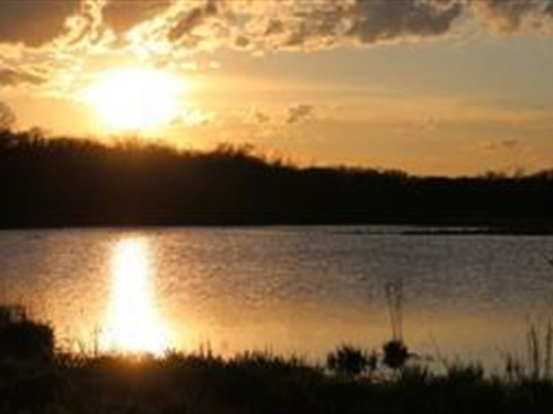 Level Tillable & Mature Oak Woods : Stoughton : Dane County : Wisconsin