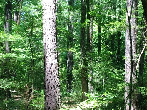 12 Wooded Acres Copiah County : Georgetown : Copiah County : Mississippi