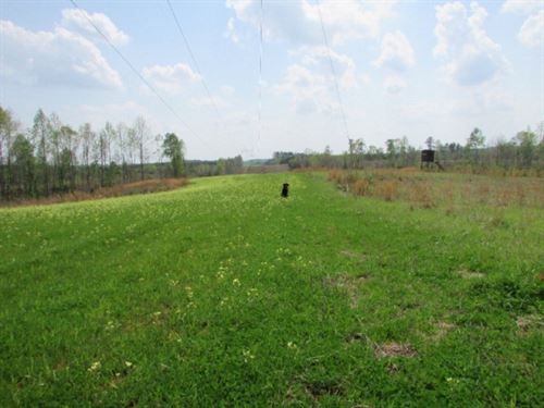 114 Acres Recreation/ Timberland In : Vossburg : Jasper County : Mississippi