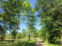 18.99 Acres Old Sign Road : Midway : Walker County : Texas