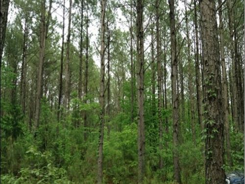 8.94 Acres In Holmes County : Richland : Holmes County : Mississippi