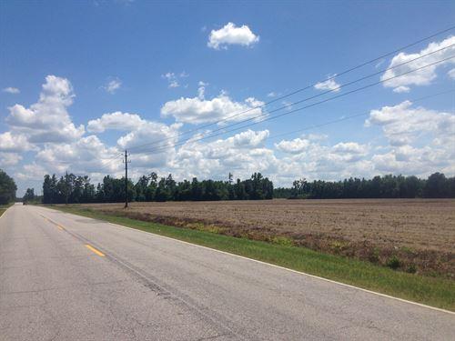 Hwy 41 Farmland Hunting : Marion : South Carolina