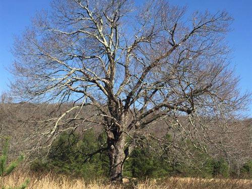 For Sale 76 Acres In Floyd County : Floyd : Virginia