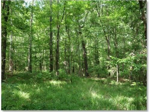 11.3 Acres In Rankin County : Florence : Rankin County : Mississippi