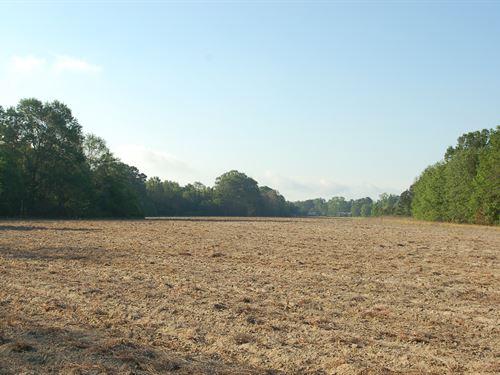 140 Acres In Eufaula, Alabama : Eufaula : Barbour County : Alabama