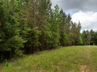 Land For Sale In Mathiston, Ms : Mathiston : Choctaw County : Mississippi