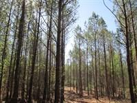 140+/- Ac Hunting/Farm Near Auburn : Lafayette : Chambers County : Alabama