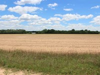 144 Acres Of Beautiful Farm Land : Oglethorpe : Macon County : Georgia
