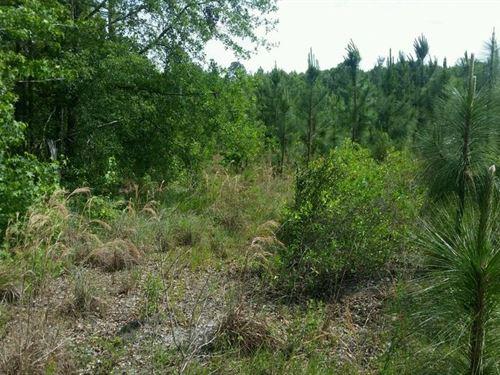 Pine, Hardwood, Abundant Wildlife : Townsend : Wayne County : Georgia