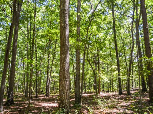 12.12 Acre Wooded Home Site Chesnee : Chesnee : Cherokee County : South Carolina