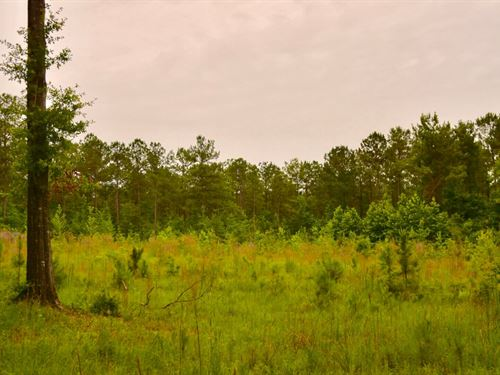 Greenville, Al. 92 Acres +/- : Greenville : Butler County : Alabama