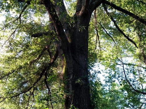 Reduced 85 Acres In Big Buck County : Smithville : Lee County : Georgia