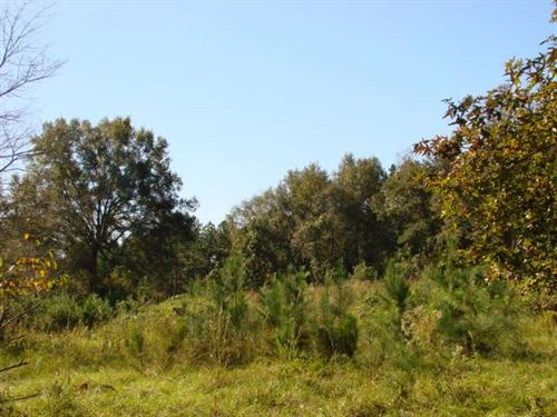Great Homesite In Great Location : Ellaville : Schley County : Georgia