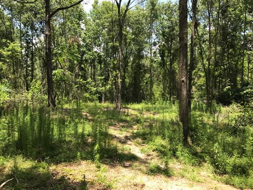 29+ Acres In Sumter County, Sc : Sumter : South Carolina